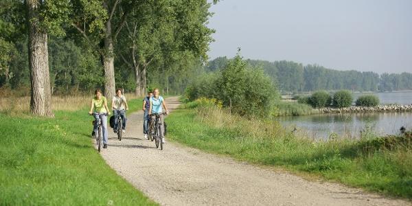 Entspanntes Radeln entlang der Rheinauen