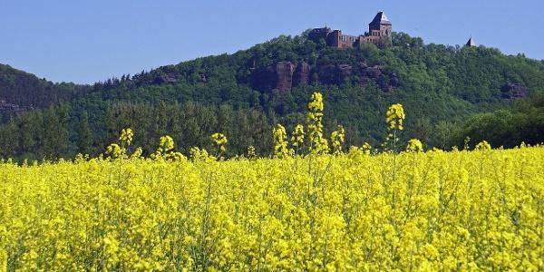 Burg Nideggen von oben