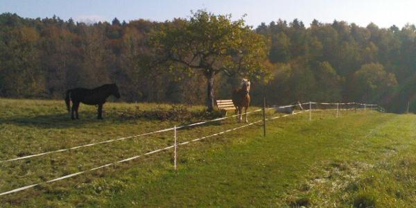Vorbei an Pferdekoppeln