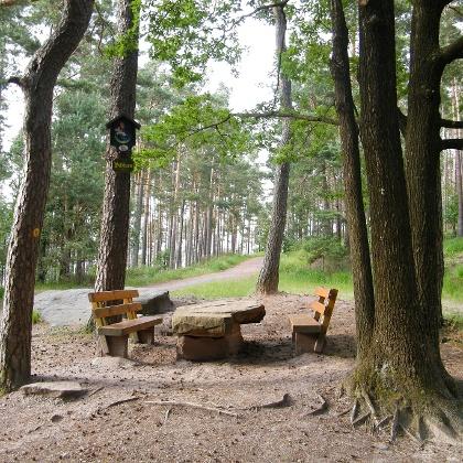 Bildbaum an einer großen Wegekreuzung im Wald