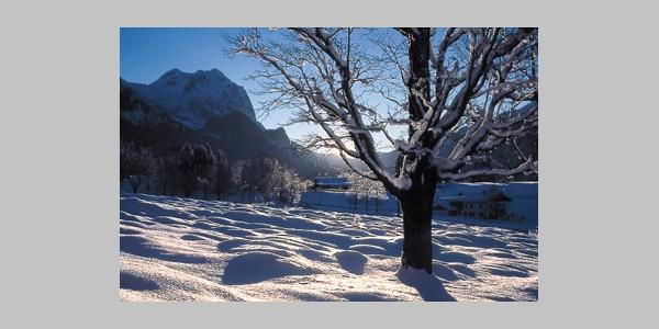 Wald-Idyll-Pfad im Winter