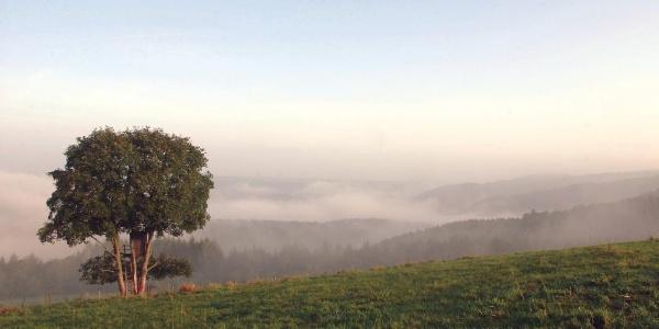 Wandertour in der südlichen Eifel: Prümer Land Tour Route 3 - Östliche Kalkmulde