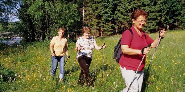 Wandern Waldviertel_Wiese