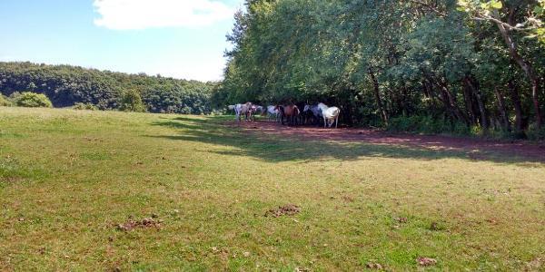 Pferde im Paradies