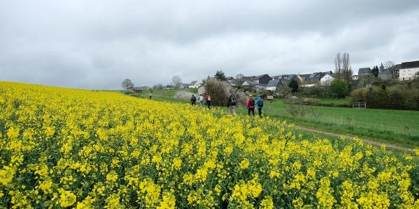 Hunsrücklandschaft bei Fronhofen