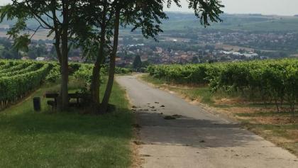 Weg Richtung Schwabenheim