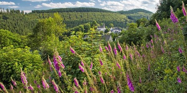Blick auf Nordenau im Schmallenberger Sauerland