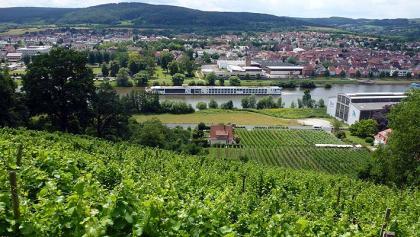 Vom Rotwein Wanderweg hat man stets einen schönen Blick aufs Maintal.