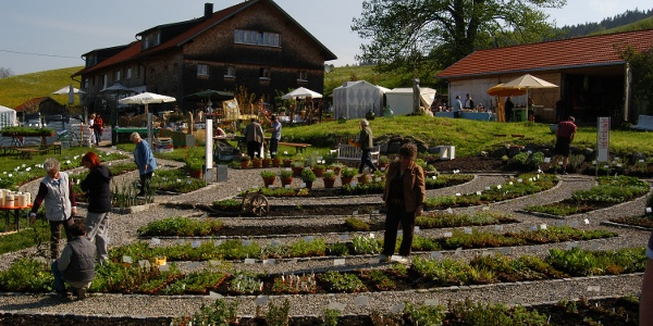 Kräutergarten Artemisia