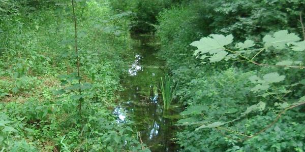 Bannwald südlich von Bruchsal