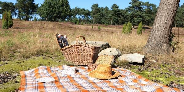 Picknick im Wacholderhain