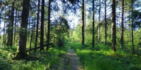 Der Grenzweg bei Kniebis