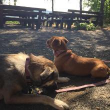 Die Hunde waren heute nur bis zur Weinwanderhütte dabei, dann wurden sie abgeholt, da zu heiß