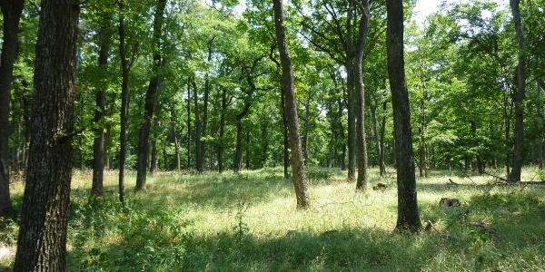 Eichenwald am Pfarrkogel
