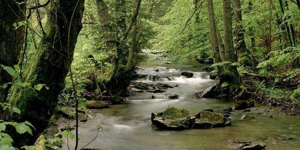 Der Wüstebach im Nationalpark Eifel.