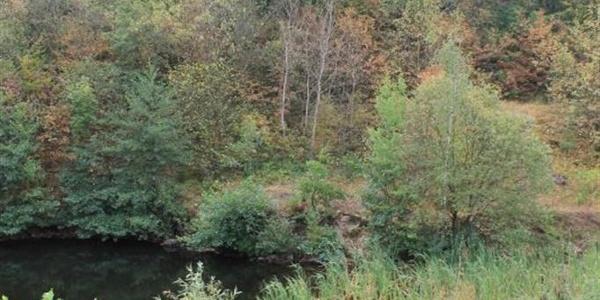aufgelassener Steinbruch - NSG Steinberg