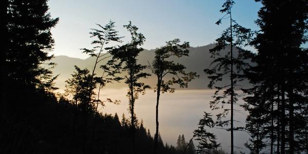 Morgennebel über der Frein