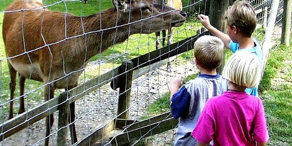 Wild im Wildgehege Bad Wünnenberg