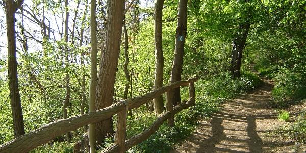 Waldweg Richtung Rengsdorf