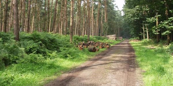 Weg durch den Reichswald