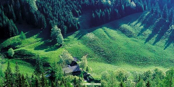 Heinzleralm (1160 m)