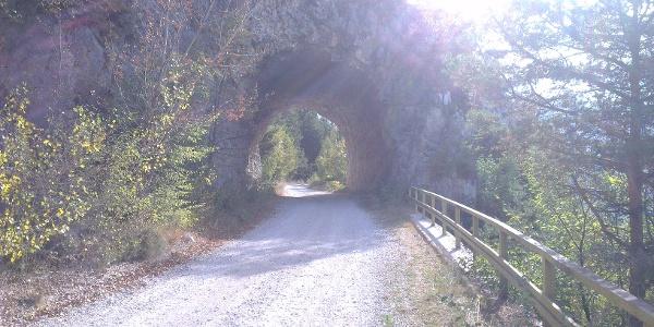 Tunnel am Anfang des Forstweges