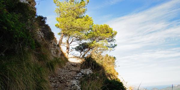 im Aufstieg zur Talaja d'Alcudia