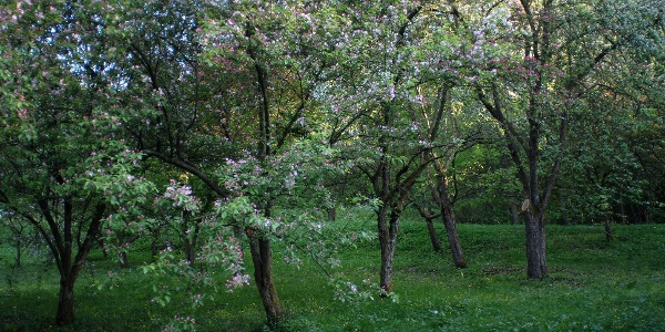 Blüte im Arboretum