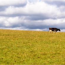 Einfach mal Kuh sein