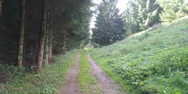Strada forestale verso Andalo.