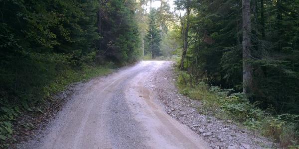 Strada forestale Andalo-Pian del Dosson.