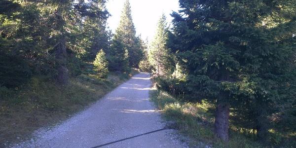 Forststraße Doss Pelà-Bait del Germano