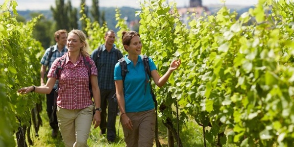 Weinwanderweg in Meissen