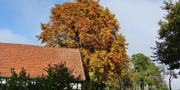 Herbst im Teutoburger Wald