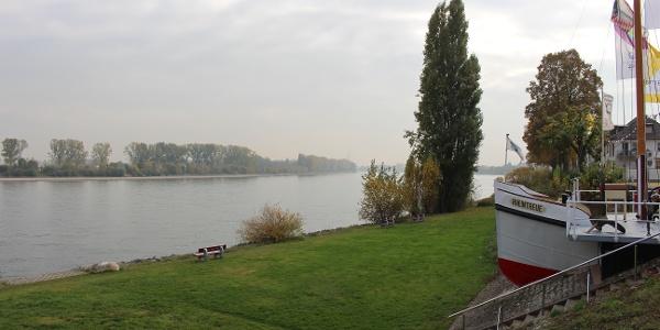 Ausblick auf den Rhein in Rheindürkheim