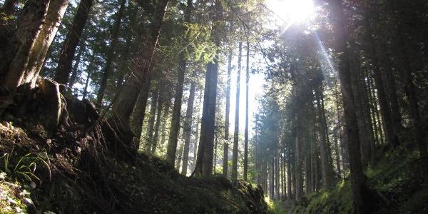 Bosco nella foresta della Gon