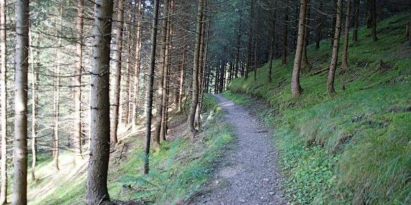 Steig im Wald über dem Golfplatz