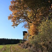 Hochsitz Peterswalder Höhe