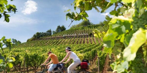 """Radeln an der berühmten Weinlage """"Roter Hang"""""""