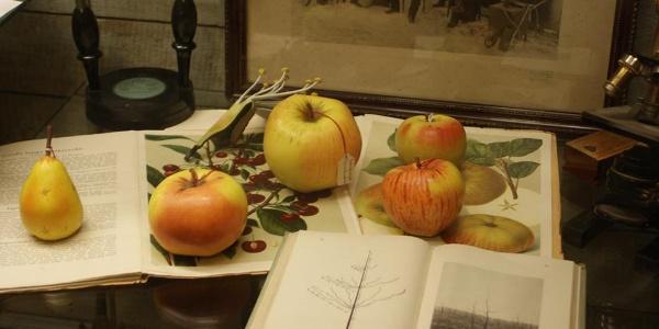 """Obstsorten in der Ausstellung im Museum """"Altes Land"""""""