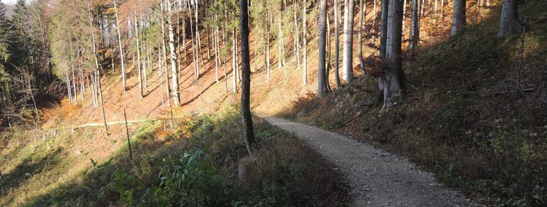 Forststraße nach Aschau