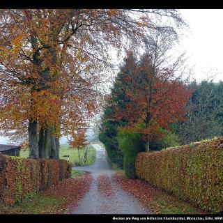 Hecken am Weg von Höfen ins Kluckbachtal