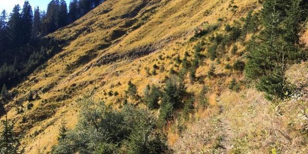 Strecke des Ultra Traillaufs Bizau