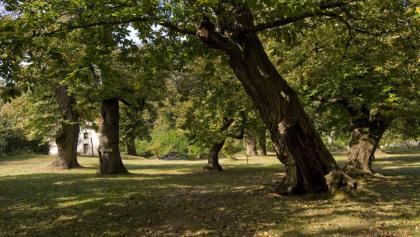 Bosco (Woods) Caproni
