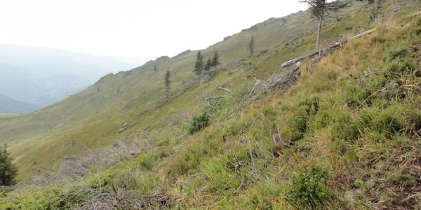 10.00h. Weglos steil aufwärts. Der Grat im Hintergrund bietet vielleicht einen leichteren Aufstieg