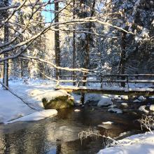Foto von Wanderung: Wandern in der Hölle • Bayerischer Wald (06.01.2017 17:27:40 #2)