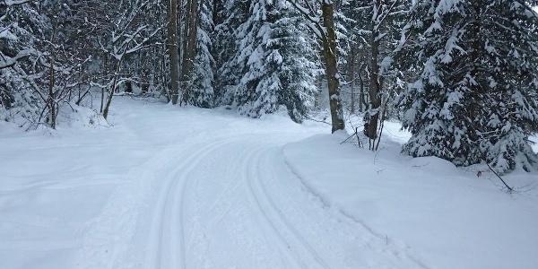 Kurzer Anstieg am Waldrand