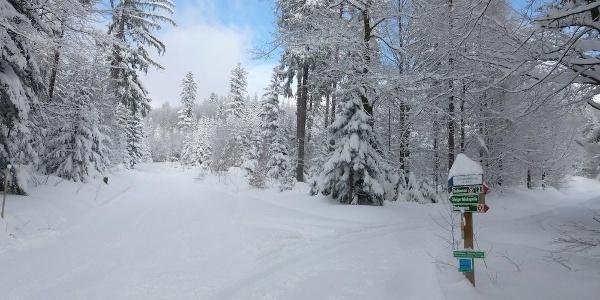Gewalzte Strecke zur Chamer Hütte links