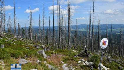 Waldschäden am Plöckenstein