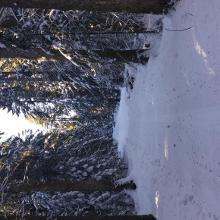 Waldweg zwischen Göttelfingen und Eisenbach